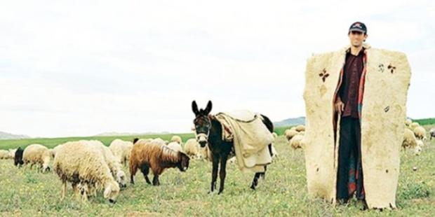 Türkiye'de artık çoban bile olamazsınız!