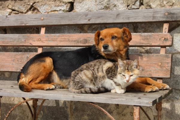 Devlet Hayvan Hastaneleri kurulmalı