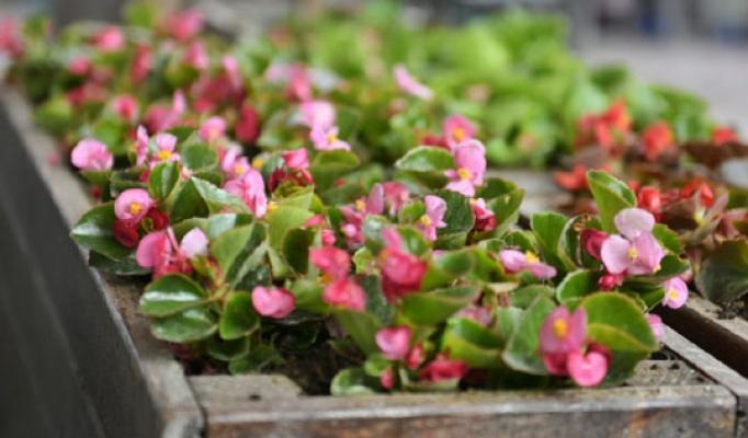 Sel mağduru çiçeklerin yerine yenileri dikildi