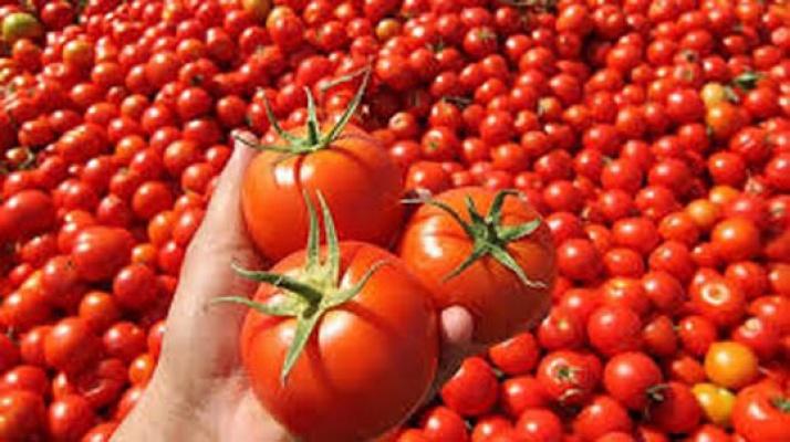 Rusya domates ve biber alımını durdurdu