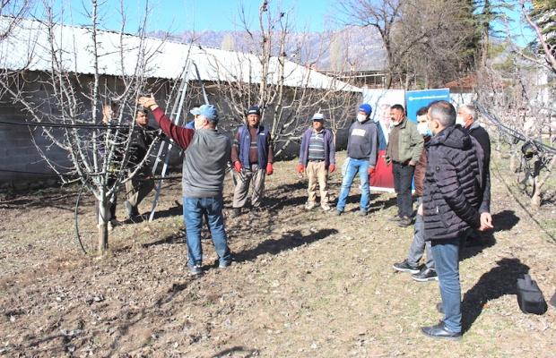 Elmalı'da çiftçiye budama ve bakım eğitimi