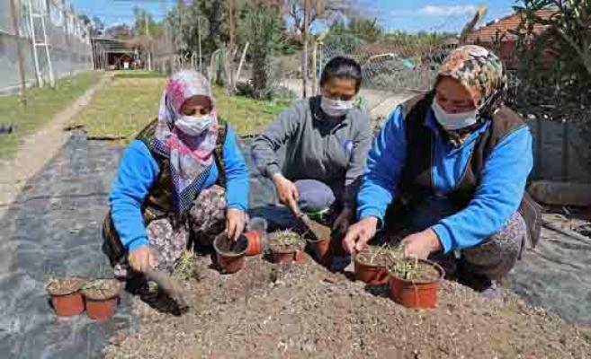 Antalya'da kuraklığa dayanıklı çim