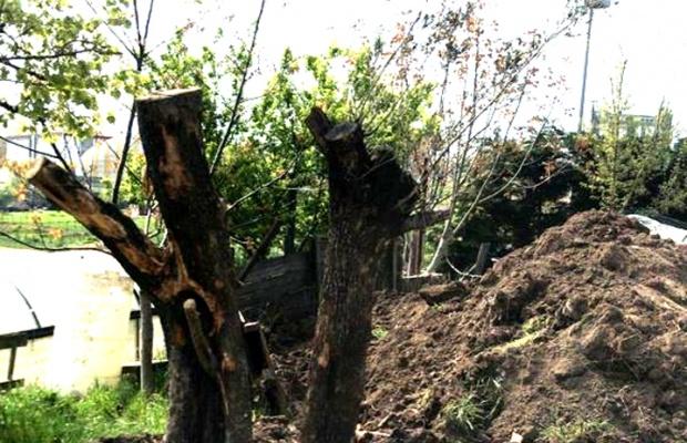 Hançerli'nin ağaçları 8 ilçede hayat buldu
