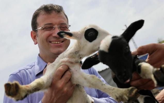 İmamoğlu'ndan hayvan üreticilerine destek