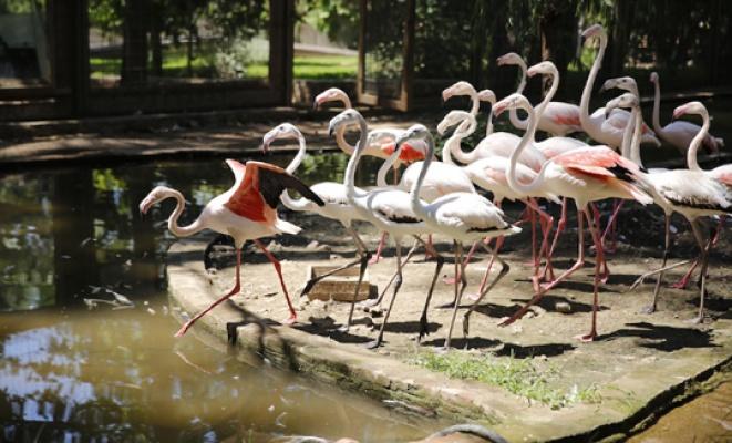 Antalya Hayvanat Bahçesi'ne yeni konuklar
