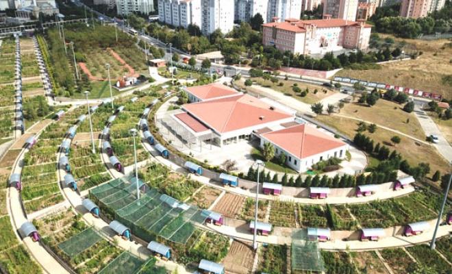 Şehrin ortasında organik tarım fırsatı