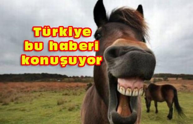 Sudan'dan At, katır ve eşek eti ithal edeceğiz!
