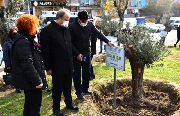Öldürülen kadınlar, zeytin ağaçlarında yaşayacak