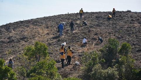 Çatalca'da 5 bin fidan toprakla buluşturuldu