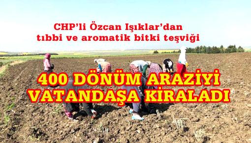 İstanbul'da Belediyeden arazi kiralayıp ekim-dikime başladılar