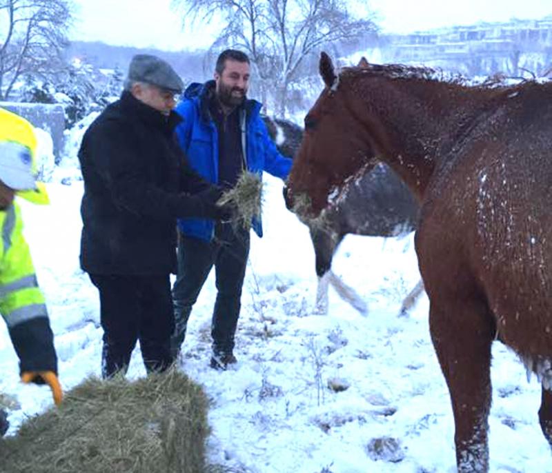 Atlar da aç ve mahsur kaldı