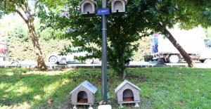 Hayvan dostu belediye: Küçükçekmece