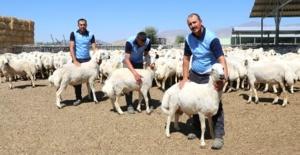 Bayram'da  hayvan refahı da gözetilmeli