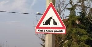 Büyükçekmece sokaklarında hayvan duyarlılığı