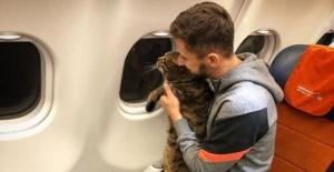 Kilosu nedeniyle uçağa alınmayan kedi diyette