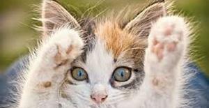 Kediler için daha iyi bir dünya
