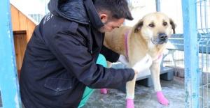 Talihsiz köpek Güçlü artık emin ellerde