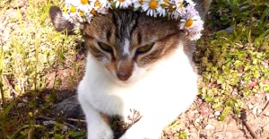 Kaftancıoğlu köyün kedisiyle bayram...