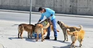 Esenyurt'ta sokak hayvanlarına mama desteği