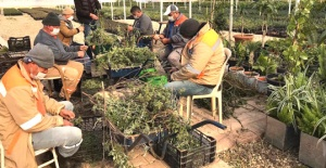 Antalya'da çiftçilere adaçayı fidesi