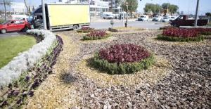 Antalya'da 'kurakçıl peyzaj'a başlandı