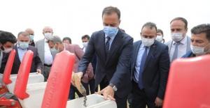 Silivri'de yerli ayçiceği AR-GE ekimi yapıldı