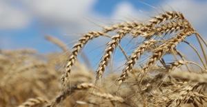 Büyükçekmece'de tarımda yeni uygulamalar