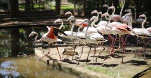 Antalya Hayvanat Bahçesine yeni...